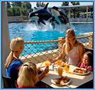 Breakfast with Shamu